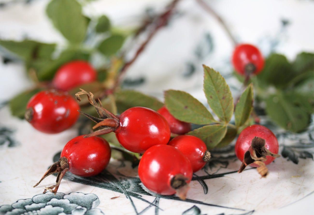 Nyponsoppa – höstens c-vitaminbomb