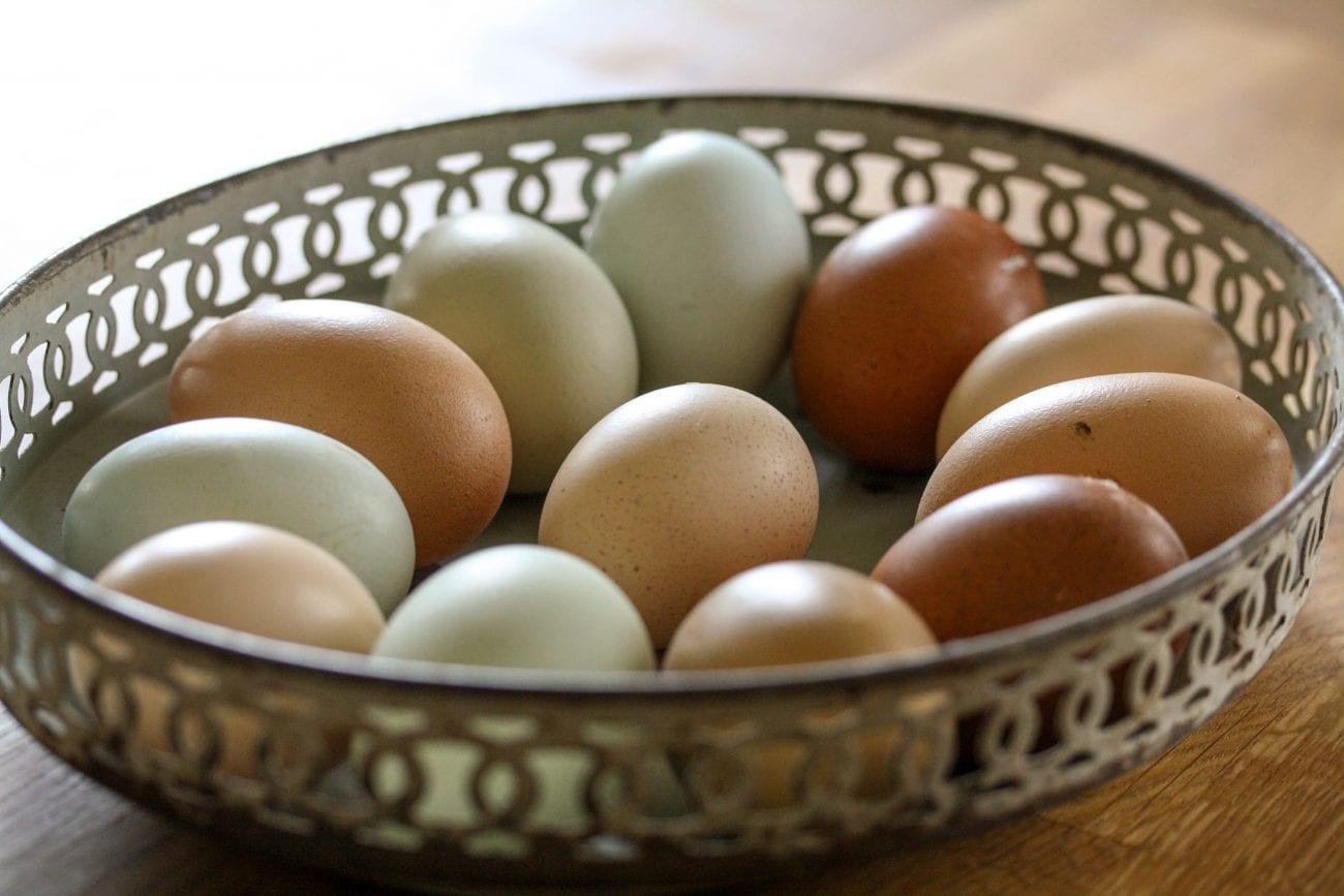 höns som värper färgade ägg